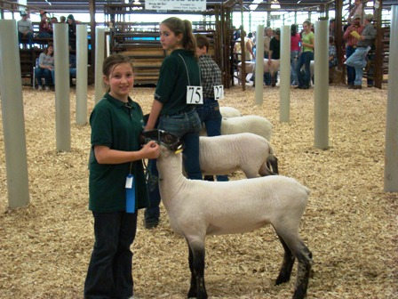 Picture of Livestock Show